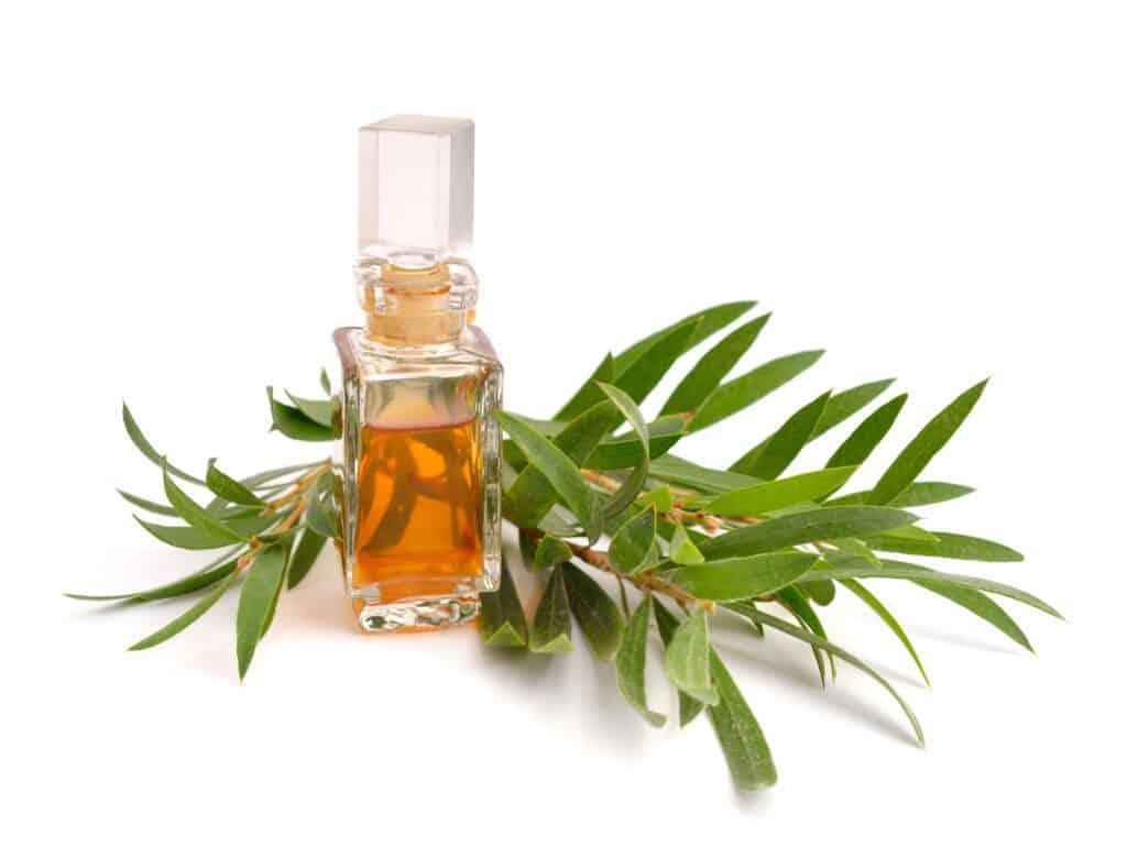 olejek z drzewa herbacianego na trądzik